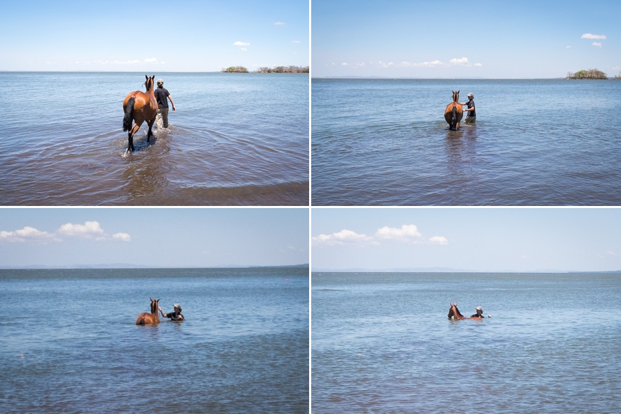 swimming with horses ometepe
