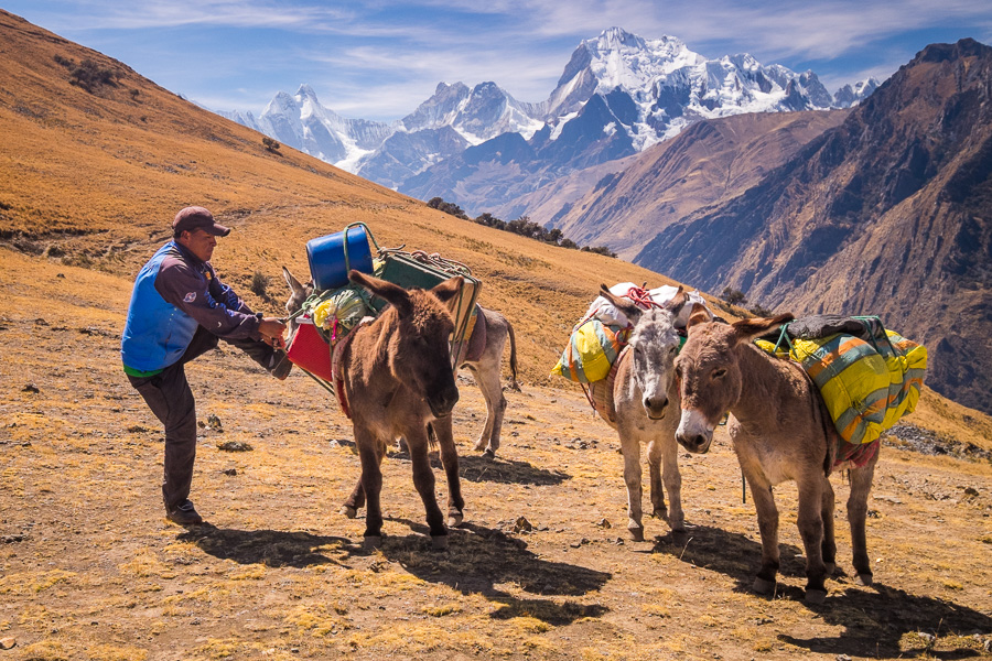 Elijio adjusting the loads on the donkeys - Pampa Llamac - Cordillera Huayhuash
