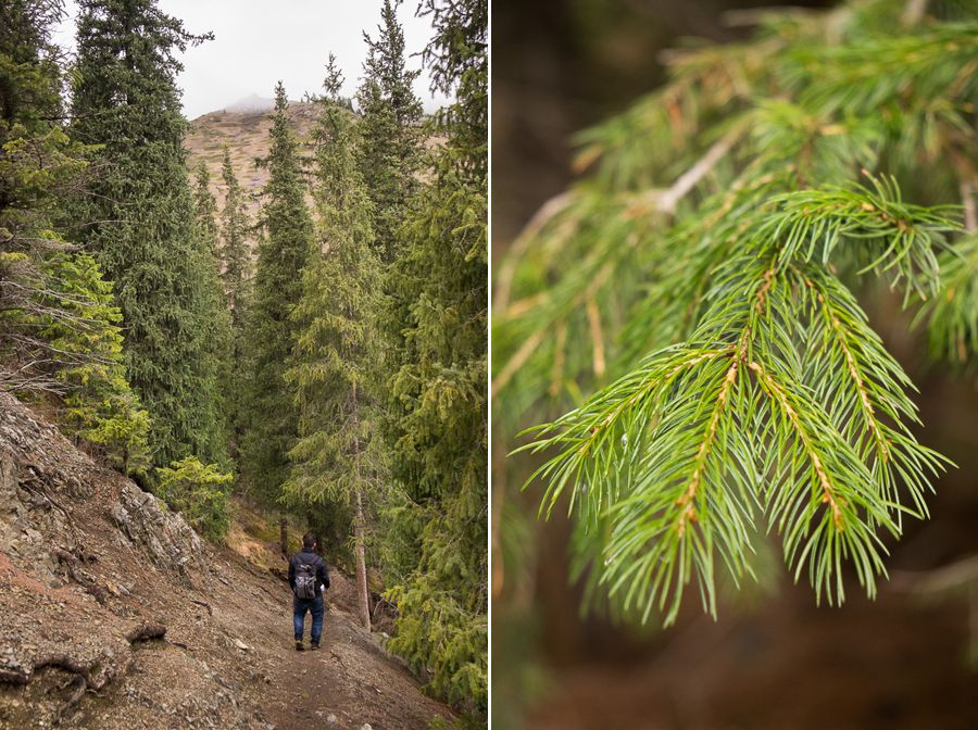 Lots of fir trees in this part of Kazakhstan