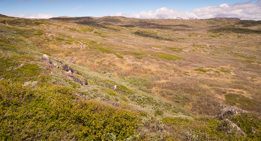 Arctic vegetation was a feature of the hike from Sillisit to Qassiarsuk via Nunataaq in South Greenland