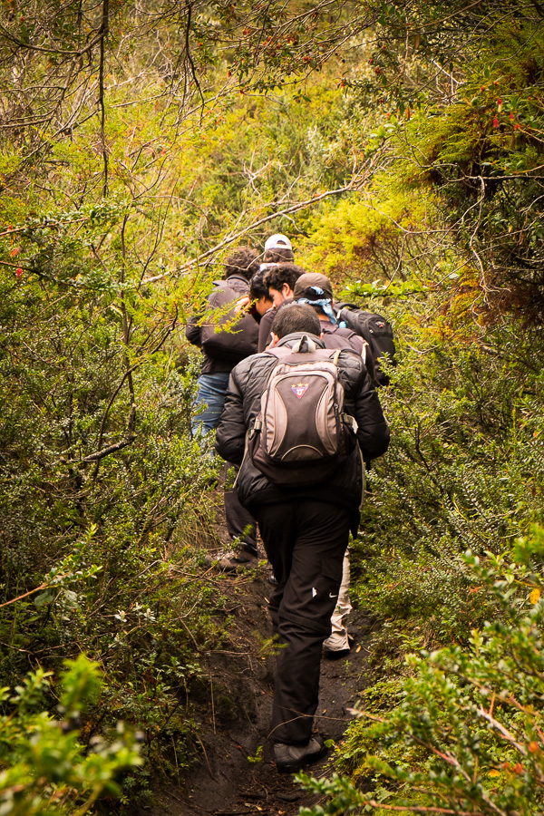 Hiking companions following the trail through a small forest on the way to Volcán Pasochoa near Quito, Ecuador