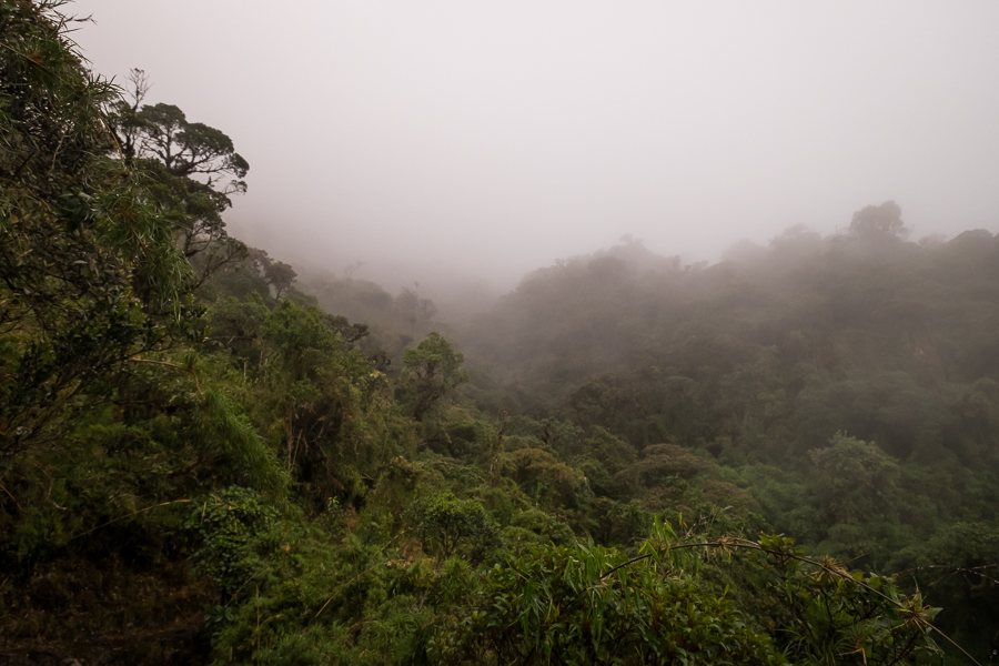 Dense vegetation seen from the trail of Los Miradores hike in the Podocarpus National Park near Loja in Ecuador
