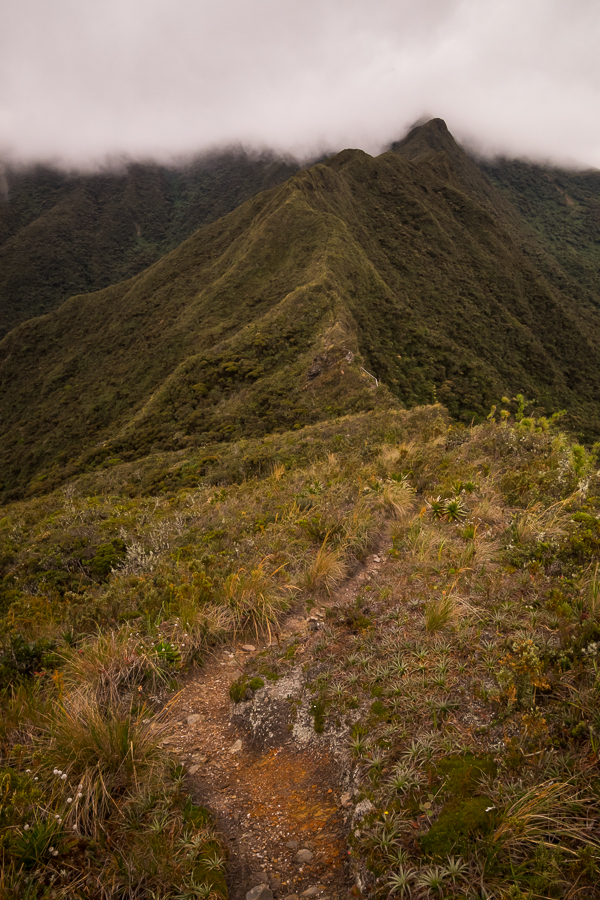 View along the narrow ridge of Los Miradores hike in Podocarpus National Park near Loja, Ecuador