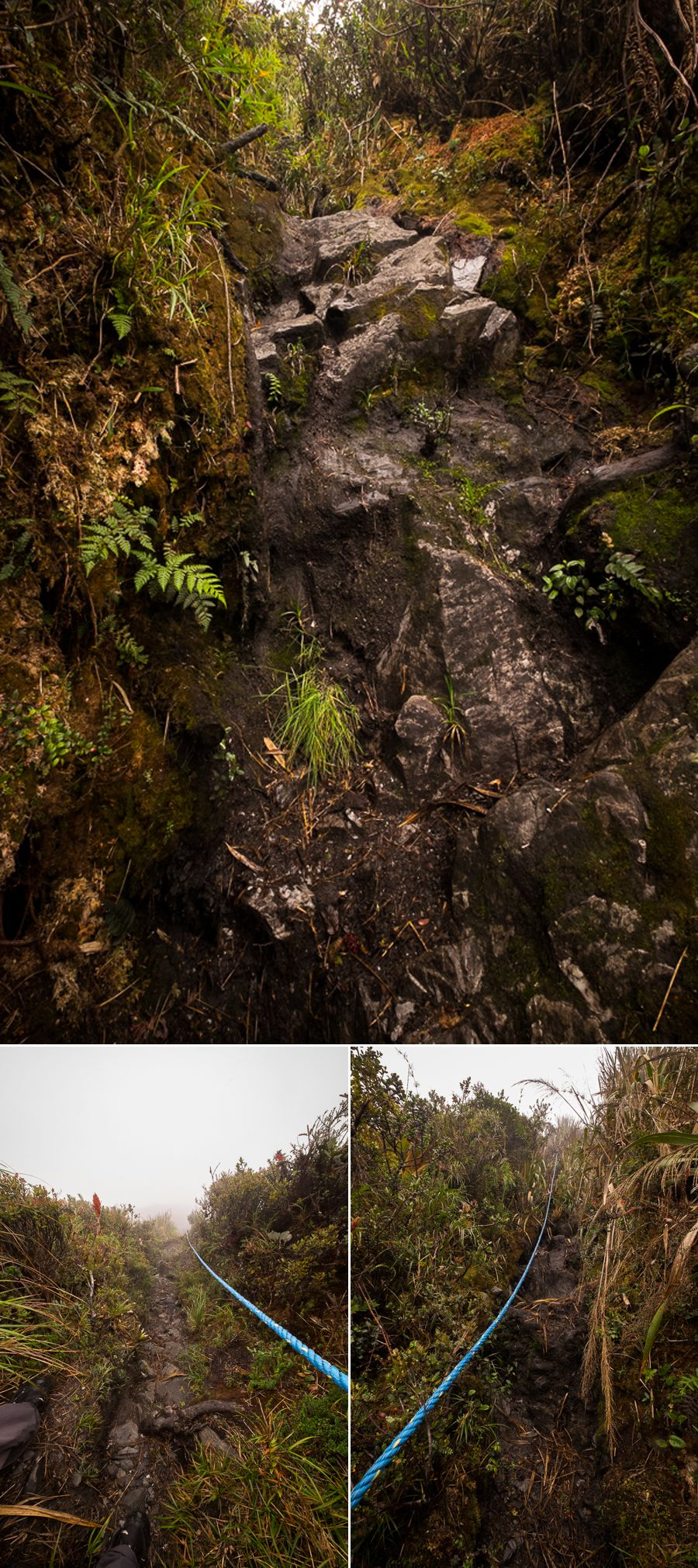 Ropes to assist in the very steep sections of Los Miradores hike in the Podocarpus National Park near Loja, Ecuador