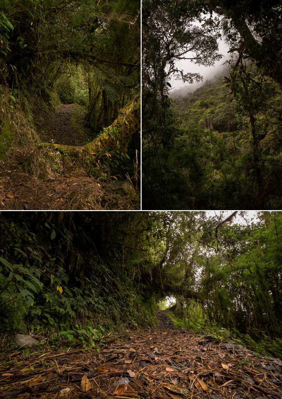 Views along the trail on Los Miradores hike in the Podocarpus National Park near Loja, Ecuador
