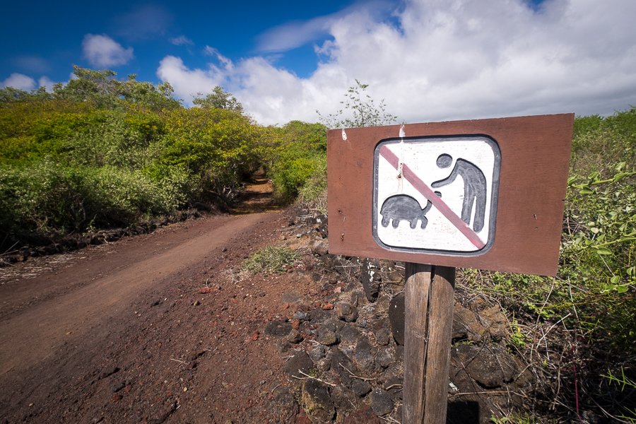Sign by side of road explaining not to touch the tortoises